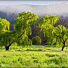 """Weeping"" Willow Lovers by bekyimage"