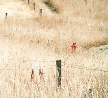 The Joy of Long Grass  by PictureNZ