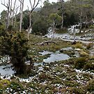 chilly Cradle Mt bushland   28 9 2013 by gaylene