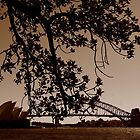 Sydney by Shannon Friel