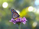 Monarch Butterfly by Susan S. Kline