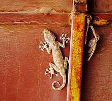 Gecko by Erny1974