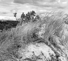 Dune Fauna  by Kathilee