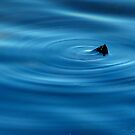 Ripples by katpix