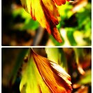 Sunny Leafs Collage by tropicalsamuelv