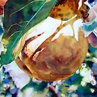 Pears Sunkissed by Elaine Frenett