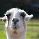 The Smiling Llama by DeeZ (D L Honeycutt)