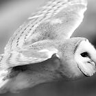 Barn Owl by ChrisMillsPhoto