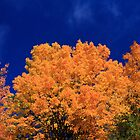 Tops of Autumn Trees by DArthurBrown