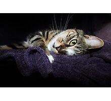 Snuggle Puss Photographic Print