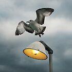 Seagull Flying Off the Light by DangRabbit