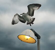 Seagull Flying Off the Light by DangRabbit