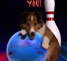Thank You Bowling Sheltie Puppy by jkartlife