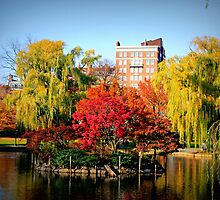 Boston Public Garden by amzani