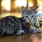 A Kitten & His Toy by Mikell Herrick