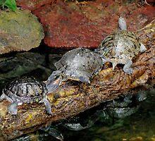 Turtle Convoy by kenspics