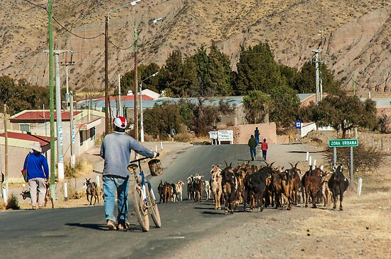 Taking My Goats to Town by photograham