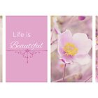 Life is Beautiful - Anemone Series by afeimages