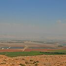 Landscape from the Gilboa by Nira Dabush