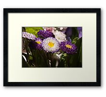 Daisies In Spring Framed Print