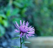 Purple Wild Flower by syerralynn