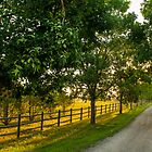 Country Road by Photopa