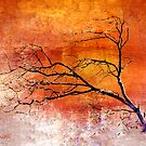 Barren Tree by CarolM