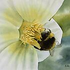 Bumble Bee by Bobbi Price