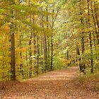 Fall Spectacular in Tennessee by GraNadur