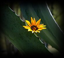 Beautiful Parasite Flower On An Agave by Al Bourassa