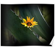 Beautiful Parasite Flower On An Agave Poster
