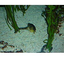 Underwater Life Photographic Print
