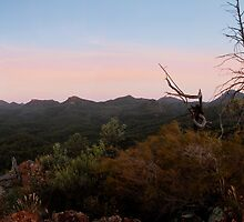 Warrumbungle National Park, NSW, Australia. by Andy Newman