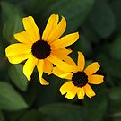 Two Susans! by Linda  Makiej