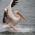 Coming in for the landing by Taschja Hattingh