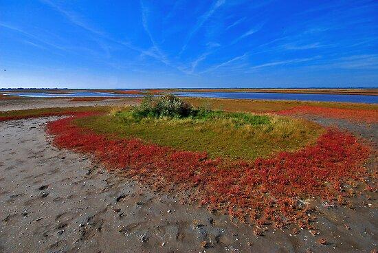 Wetlands of Flakkee by Adri  Padmos