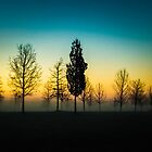 Trees at Dawn by Andy Parker