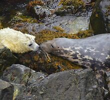 Sealed with a Kiss by Rob Parsons