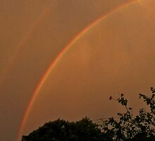 Double Bow by sarnia2