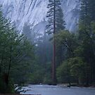 Silently in the Night - Merced River Yosemite by Barbara Burkhardt