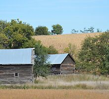 Rural Farmstead by RenieRutten