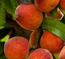 Bountiful peaches by Celeste Mookherjee