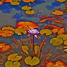 Waterlilies & koi at the local pond by Nira Dabush