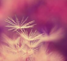 cotton candy  by Ingz