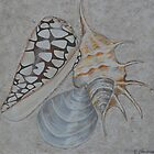 Shells By Coralie Newman by TwoBaysArtGroup