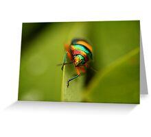 Beautiful Beetle, Broome Greeting Card