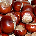 Crop of Conkers by lisa1970