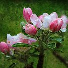 Oil style pink apple flowers art photography.  by naturematters