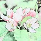 Colorful sketch light  pink apple flowers and green leaves photo art.  by naturematters