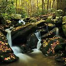 smoky mountains in fall 2 by dc witmer